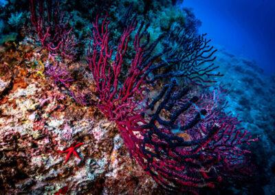 Ventotene escrursioni subacquee
